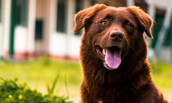 Hipo en perros: una afección común en caninos
