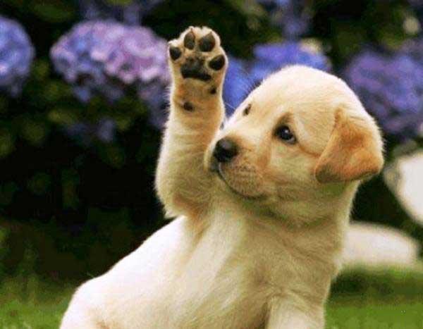 Cómo enseñar a un Perro: consejos y trucos
