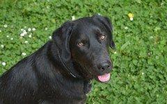 Microchip al cane: a che età bisogna metterlo?