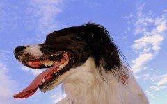Mi perro respira muy rápido: causas comunes y prevención