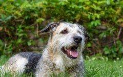 Ecco perché il cane morde al viso: un recente studio