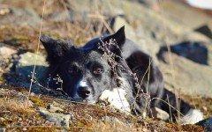 Malattie del cane: il Lupus eritematoso nel cane