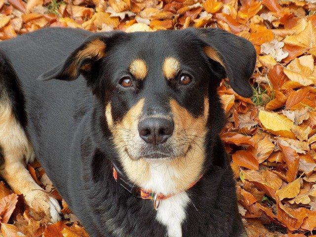 Malattie del cane femmina: quali sono e come curarle