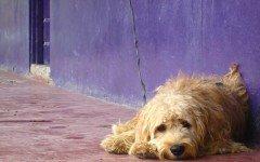Mi perro está triste: algunos consejos caninos
