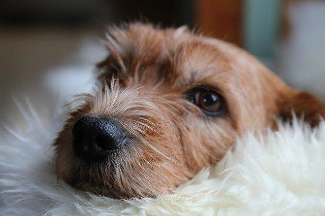 Malattie mortali del cane: quali sono e come prevenirle