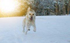 El mundo del Perro: el mundo de nuestras mascotas