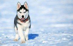 Nombre Perro Macho: los mejores nombres para perros