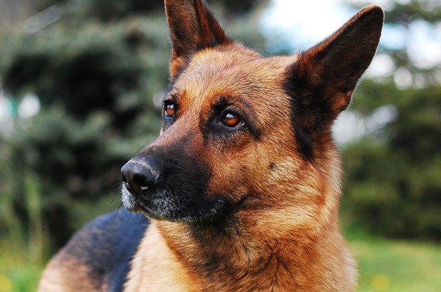 Linfoma nel cane: cause e sintomi della malattia