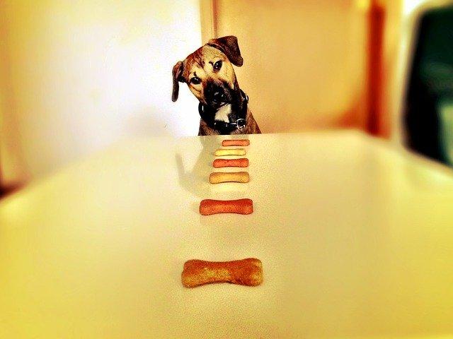 Comida de perro a domicilio: ¿es posible?