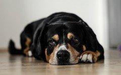 cura della depressione del cane