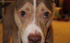 I cani riconoscono i torti subiti? Scopriamolo insieme!