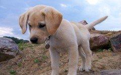 Razza del cane della carta igienica: carattere e caratteristiche