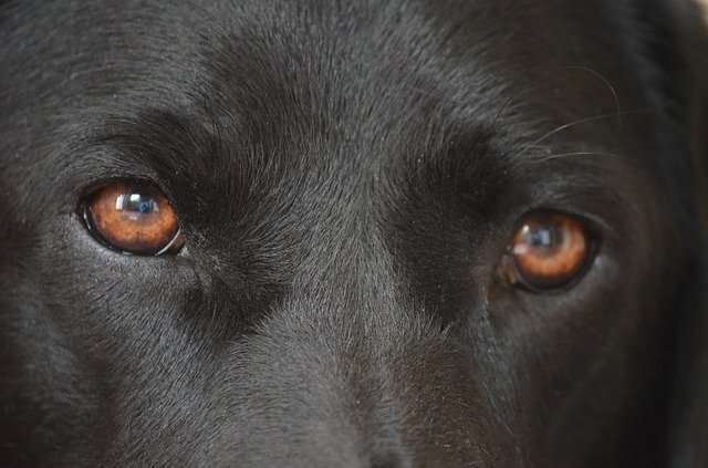 credenze errate sui cani