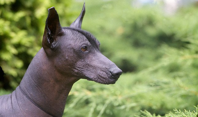 Ugly Dogs: Some dogs are so ugly that they are cute