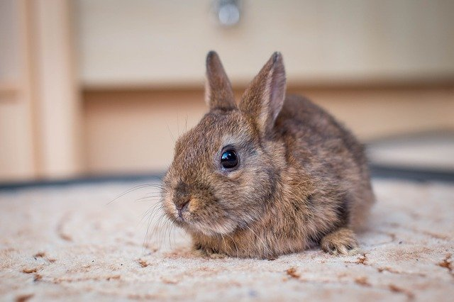 vacanza con il coniglio