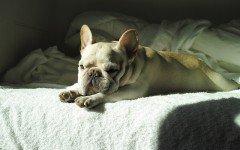 Dolori articolari nel cane: le cause e i rimedi