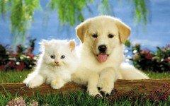 Los más divertidos videos de perros y gatos