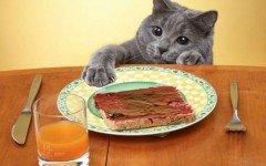 Gato roba comida: qué hacer con tu gato