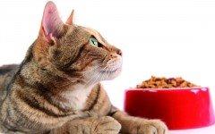 Mi gato vomita comida sin digerir: ¿qué hago?