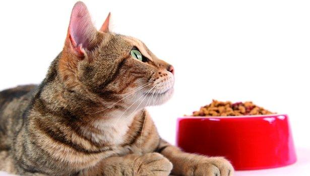 comida para gato en plato