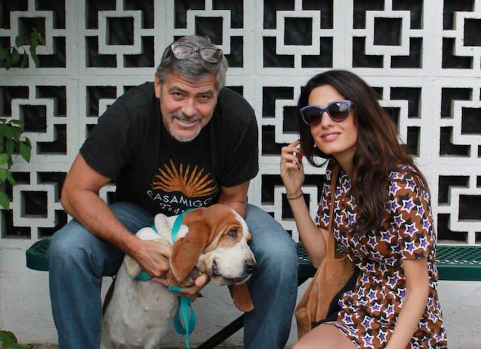 George Clooney e la passione per gli animali
