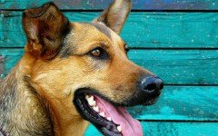 Las Dentaduras Perrunas: todo sobre los dientes del perro