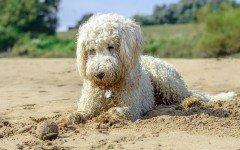 spiagge per cani Rimini