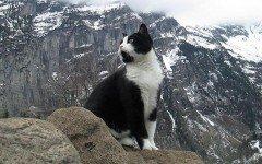 In montagna con il gatto