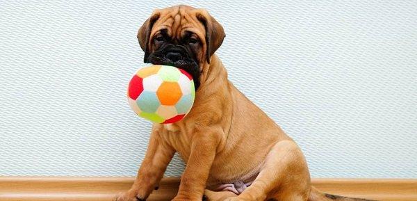 Productos para perros: Las cosas para perros mas importantes