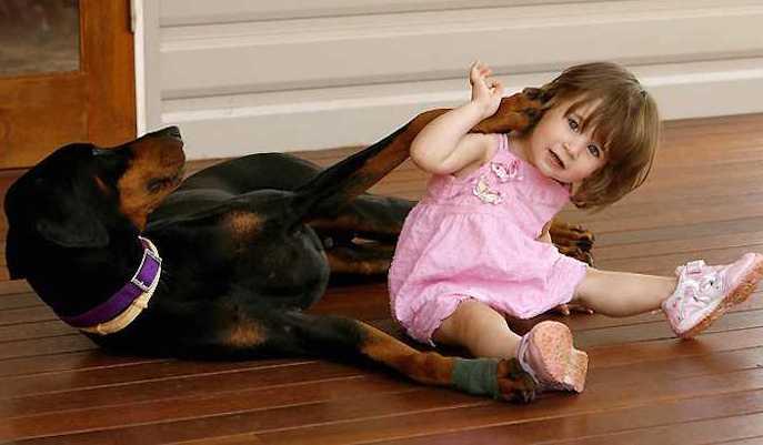 Cane adottato morde una bambina: ma cosa è accaduto?
