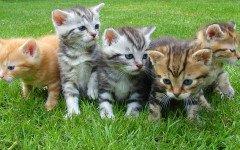 Gatti hanno conquistato il mondo