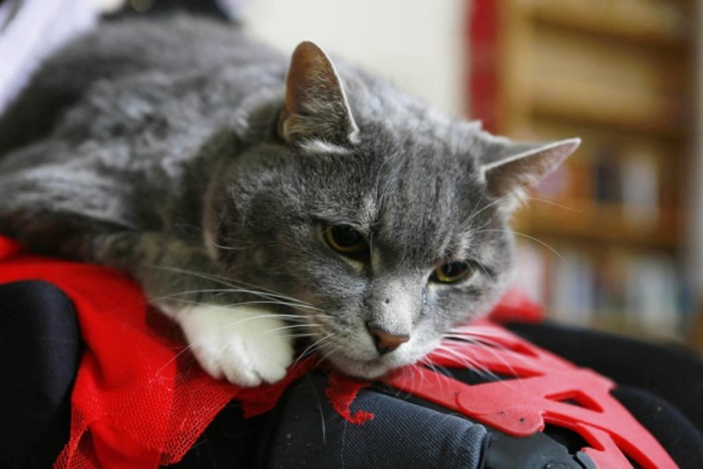 Lunar, ii gatto che salva la sua umana ogni giorno