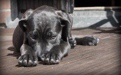 Por qué tiemblan los perros: conoce las razones