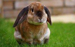 Animales domésticos pequeños: unas mascotas diferentes