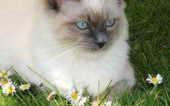 Malassorbimento nel gatto: sintomi, diagnosi e cura