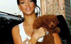 Rihanna, cantante amante degli animali