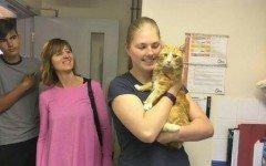 Rio, il gatto ritrovato a 250 km da casa dopo sei mesi