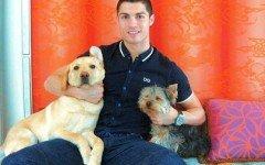 Cristiano Ronaldo: amore unico per Abelhinha e Marosca