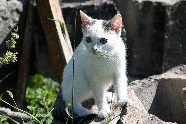 Cosa fare se si trova un gatto randagio non ferito?