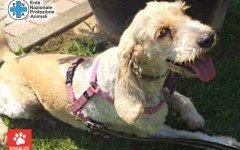 Teresa è in cerca di adozione: aiutiamola!