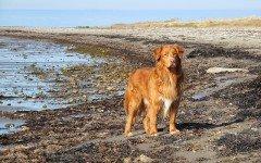 I cani possono prevedere il terremoto? Scopriamolo!