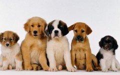 Clases de Perros: a que clase apartenece mi perro?