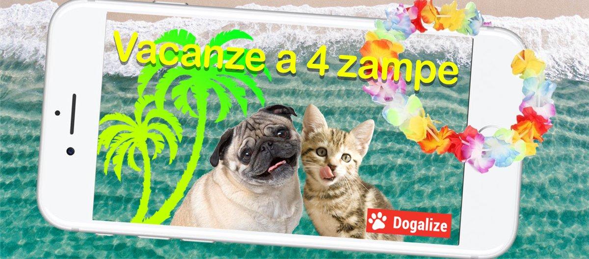 Arriva l'estate: scopri il contest Dogalize Vacanze a 4 Zampe