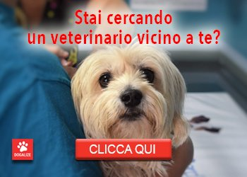 banner_veterinario