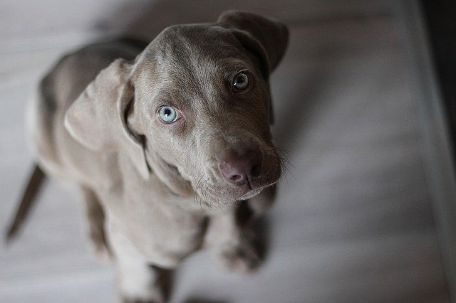 Ernia ombelicale nel cane: cause, sintomi e terapia