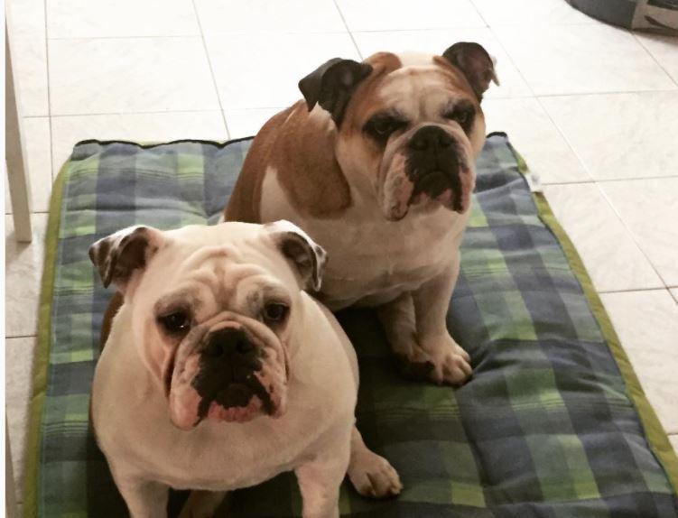 23 Giugno - Giornata Mondiale dei Cani in Ufficio - Zoe e Carlotta Dogalize