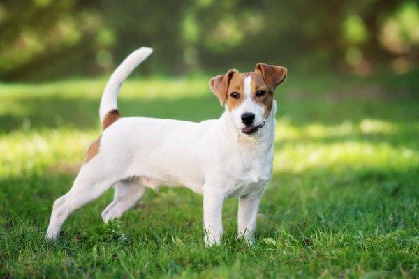 Raza del perro de la lotería: un tierno ganador