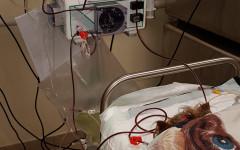 Terapia sostitutiva renale: l' emodialisi negli animali