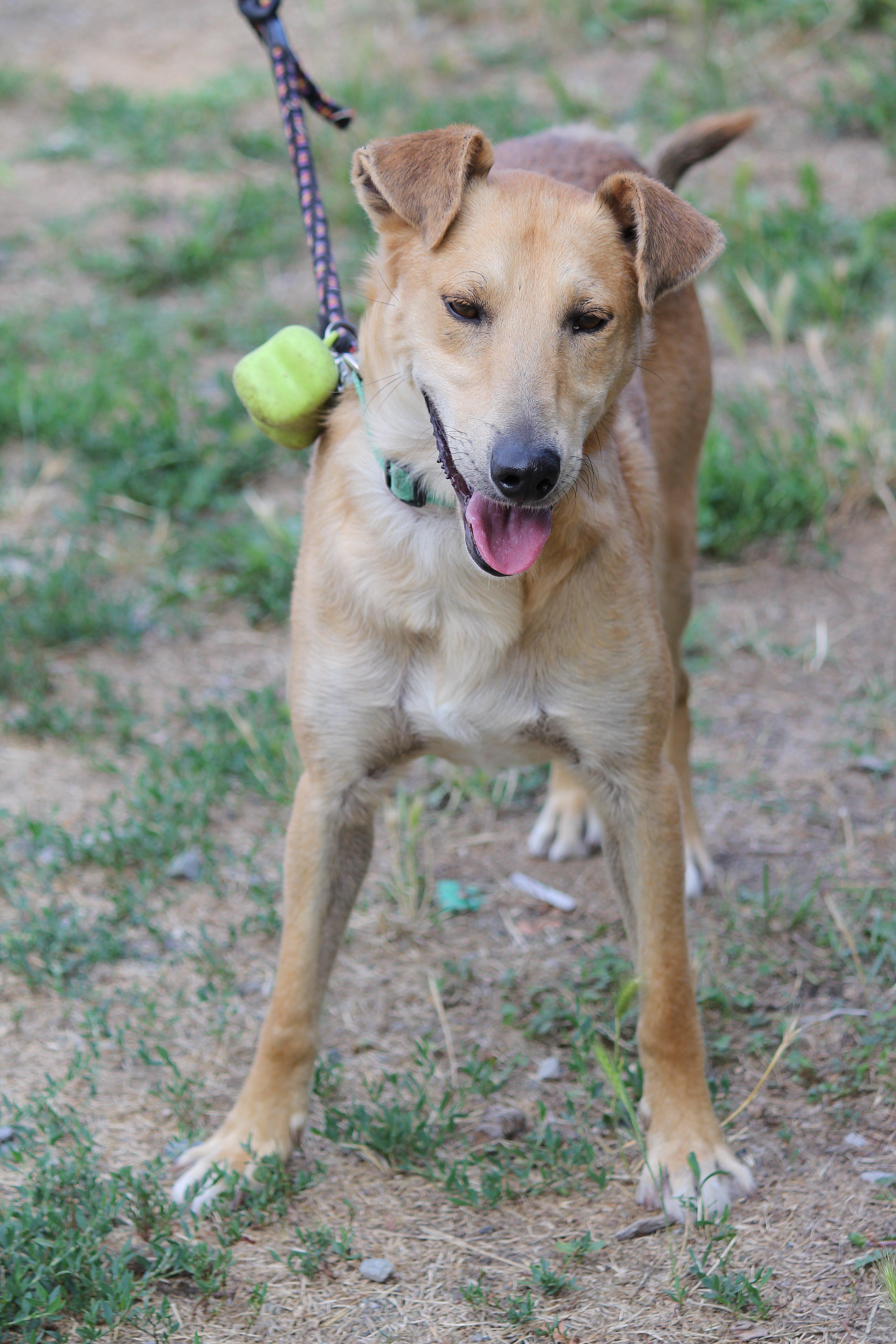 Leo è in cerca di adozione: aiutiamo questo cucciolo!