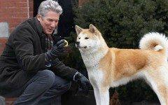 Razza del cane Hachiko: aspetto e carattere dell'Akita Inu